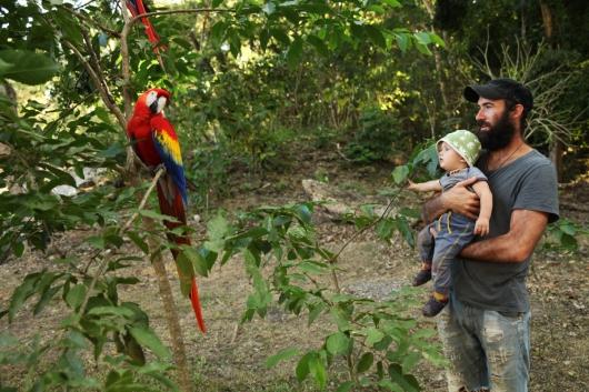 In einem Park leben in Honduras 30 wilde Papageien